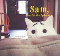 Sam the cat with eyebrows /anglais