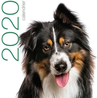 Calendrier mural 2020 - chiens