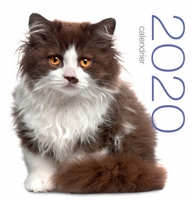 Calendrier mural 2020 - chats
