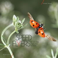 Speed flyers, le vol des insectes révélé