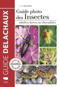 Guide photo des insectes