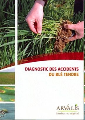 Diagnostic des accidents du blé tendre